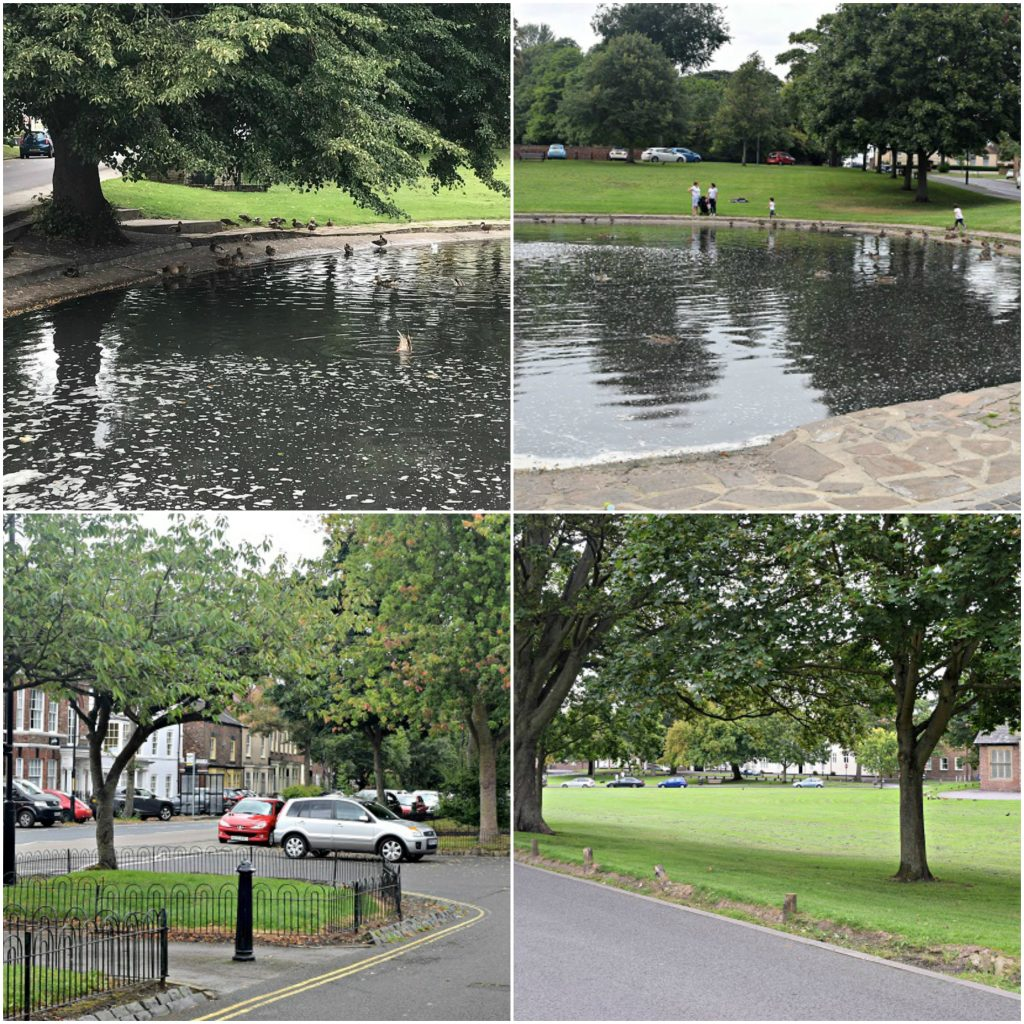 northern-niche-out-and-about-in-norton-duck-pond