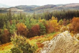 northern-niche-autumn-walk-feature