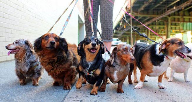 northern-niche-dog-cafes-hessian